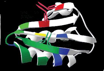 Peptide Antigen Design for Antibody Services