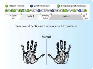D amino acid peptides