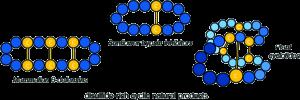 disulfide rich cyclic natural product