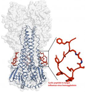Cyclic peptides as broad-spectrum antiviral agent