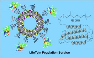Pegylation service from LifeTein