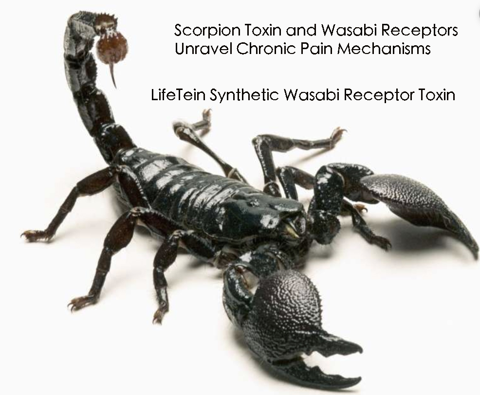 Synthetic Scorpion Toxin Peptides