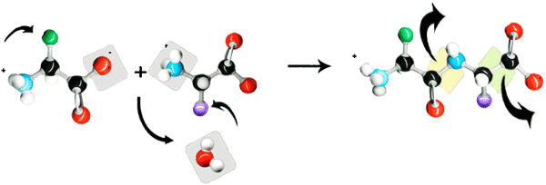 peptide bond for peptide synthesis