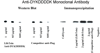 Anti-DYKDDDDK antibody affinity camparison with Sigma