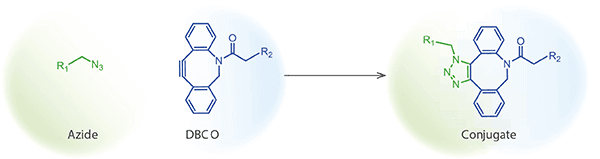 Peptide synthesis: Click Chemistry: Peptide Oligonucleotide Conjugate