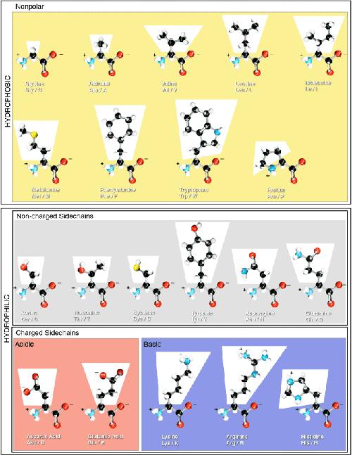 custom peptide synthesis tools amino acid properties. Black Bedroom Furniture Sets. Home Design Ideas