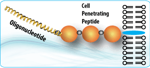 Peptide synthesis: Cell Penetrating Peptide Oligonucleotide Conjugate