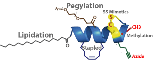 Peptide Modifications