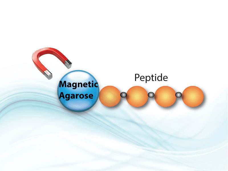 Peptide Conjugation Magnetic Agarose, 10% bead suspension