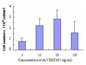 Proliferation of HUVECs examined by means of increased cell number in the presence of rh-VEGF165 for 96h