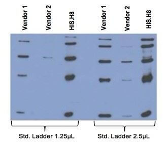 Comparison between anti-His tag (HIS.H8 / EH158) mAb with 2 different vendor Abs, probed against a standard ladder containing five different His-tagged proteins