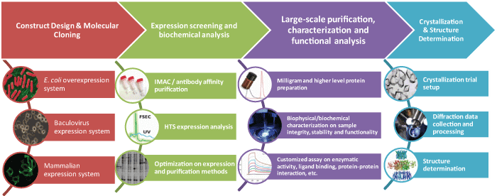 Protein Expression Service and Crystallization