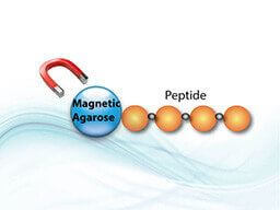 LifeTein Magnetic Agarose